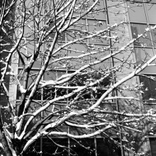Acros 100; Xtol.
